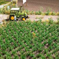 1266 Busch картофельное поле Kartoffelpflanzen