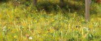 6043 Busch луг Starter-Kit Wiese & Wald H0